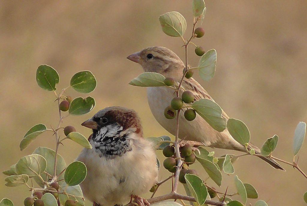 Birds of IIT-Jodhpur